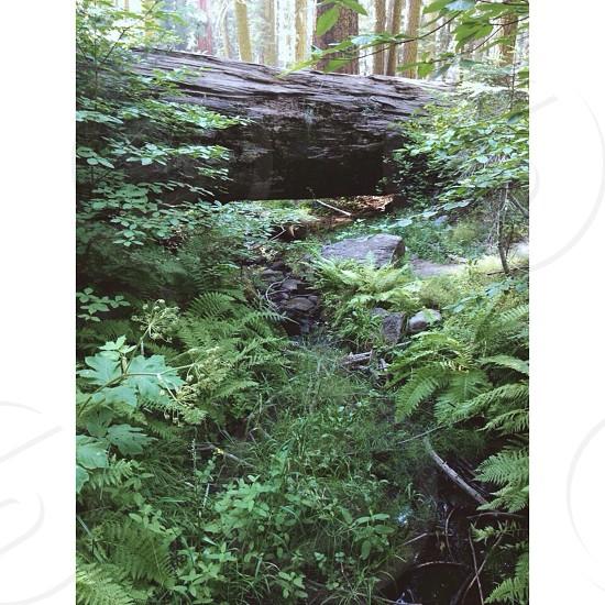 green fern plants near log photo