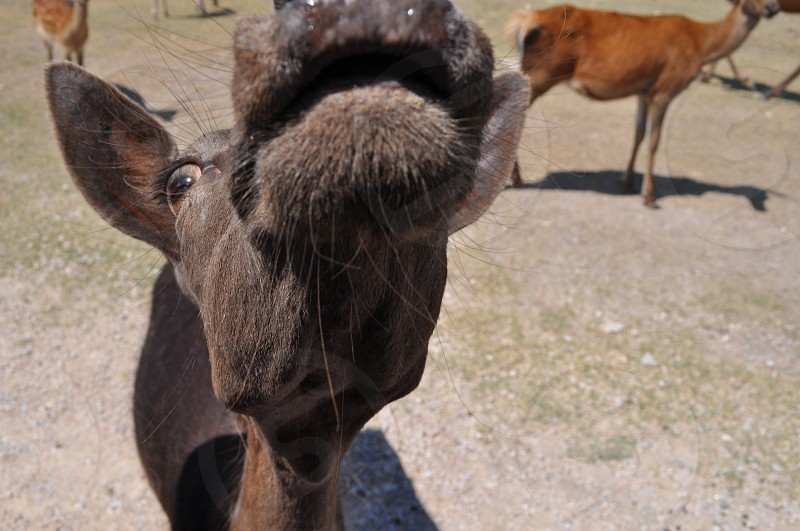 black goat near brown goat photo