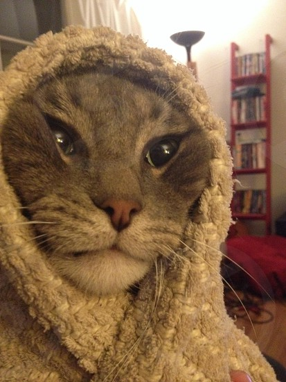 gray cat covered with beige textile photo
