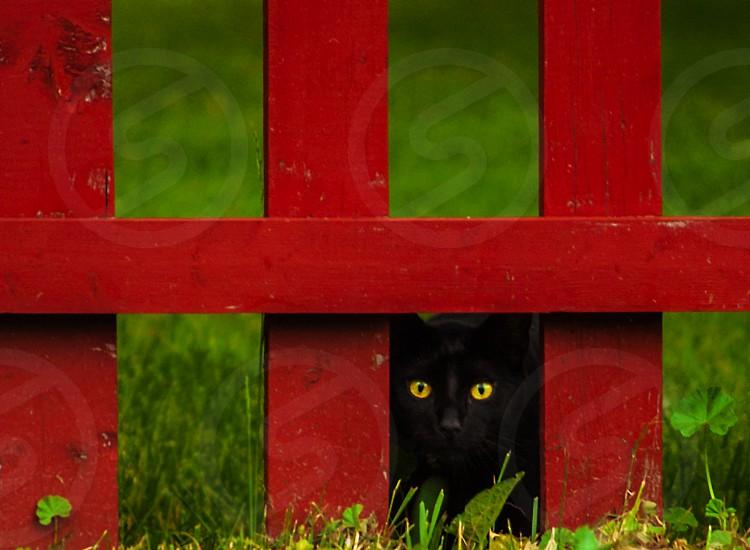 Black cat fence animal  photo