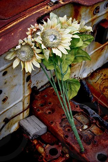 Vintage flowers photo