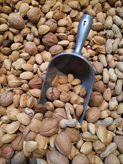 my favorite nuts nuts almonds hazelnuts pecans peanuts walnuts  photo