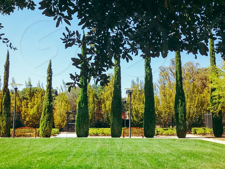 trees line up on lawn photo