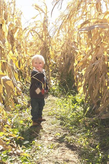 Corn maze exploring  photo