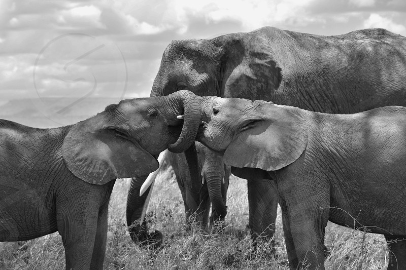 World Elephant Day...celebrate the love of elephants. photo