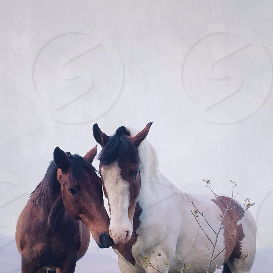brown horse beside white and brown horse photo