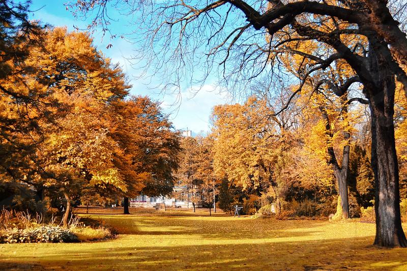 Autumn in Paris photo