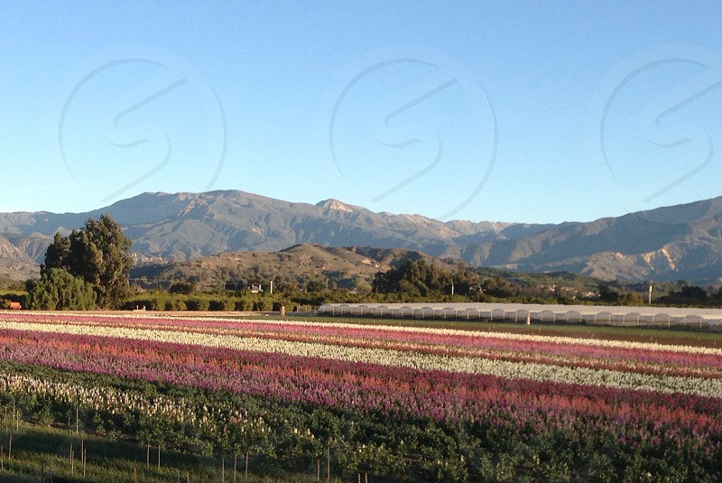 Santa Paula California  photo