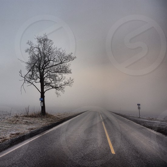 Leading way - the way forward - getting out of the fog - street - tree - nature - landscape  photo