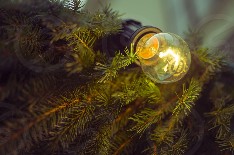 branch bright bulb celebration christmas classic closeup color december decoration electric electricity energy evergreen filament fir glass glowing green holiday illuminated incandescent lamp light lightbulb modest moody ornament pine poor power purple season shiny simple spruce tree xmas photo