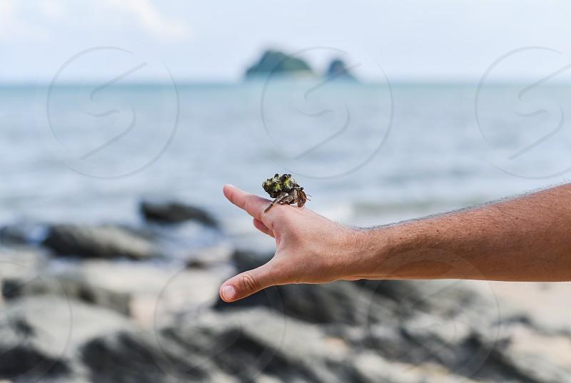 shell crustacean critter sea crab beach photo