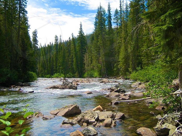 A River in the Wilderness photo