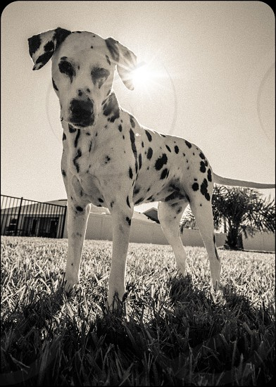 A recent pet photo shoot with 2 amazing dogs. But then all dogs are amazing. photo