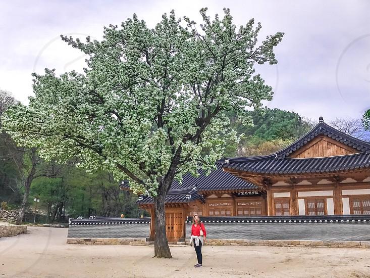 temple south korea tree flower people seoraksan tourist tourism culture religion Buddhism monastery asia scenic landscape park photo