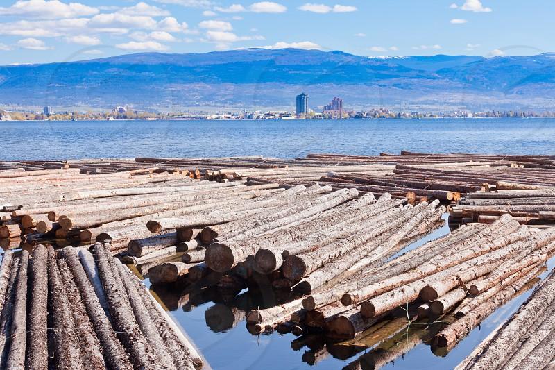 Timber floats on Okanagan Lake with city of Kelowna across British Columbia Canada photo