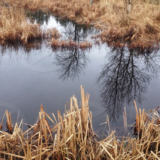 brown weeds and body of water photo