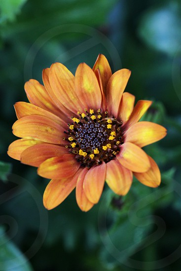 brown yellow and black flower macro photography photo
