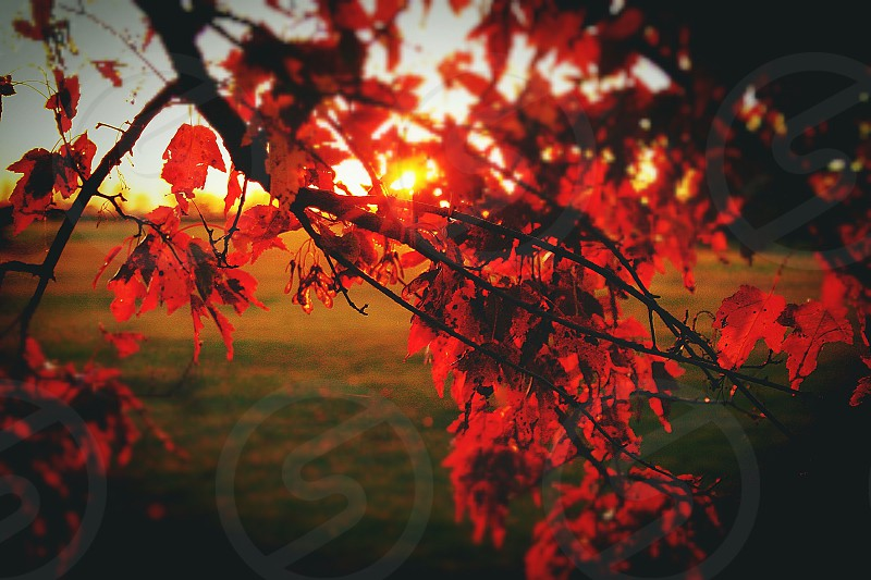 Sunset fall autumn red leaves sunlight branches photo