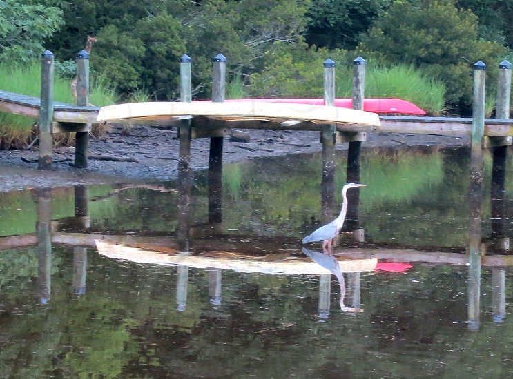 Blue Heron dock and boats reflected in Onancock Creek Eastern Shore Virginia photo