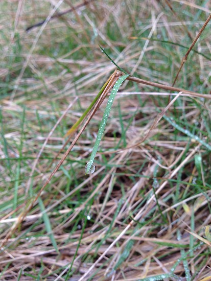Water on grass photo