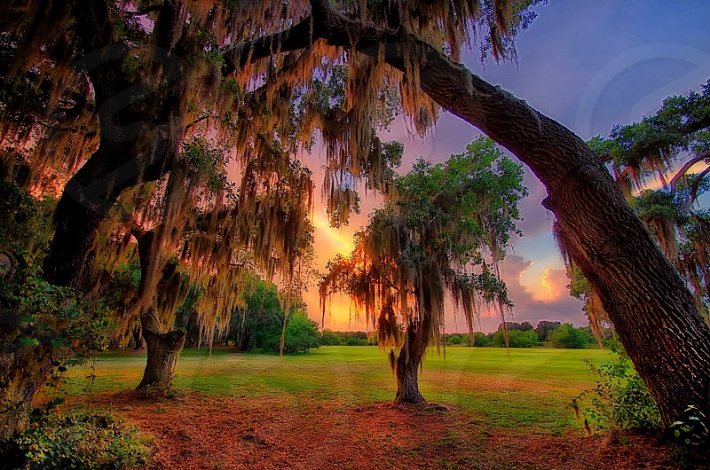 Mossy sunset  photo