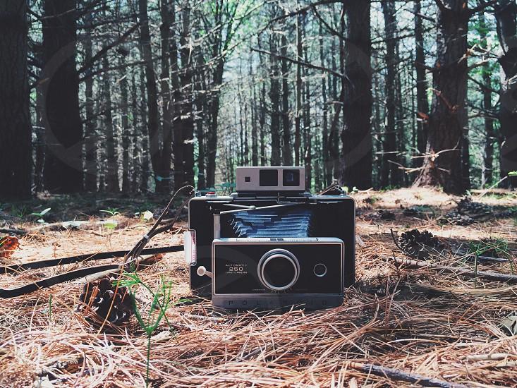 Polaroid camera vintage camera camera in forest photo