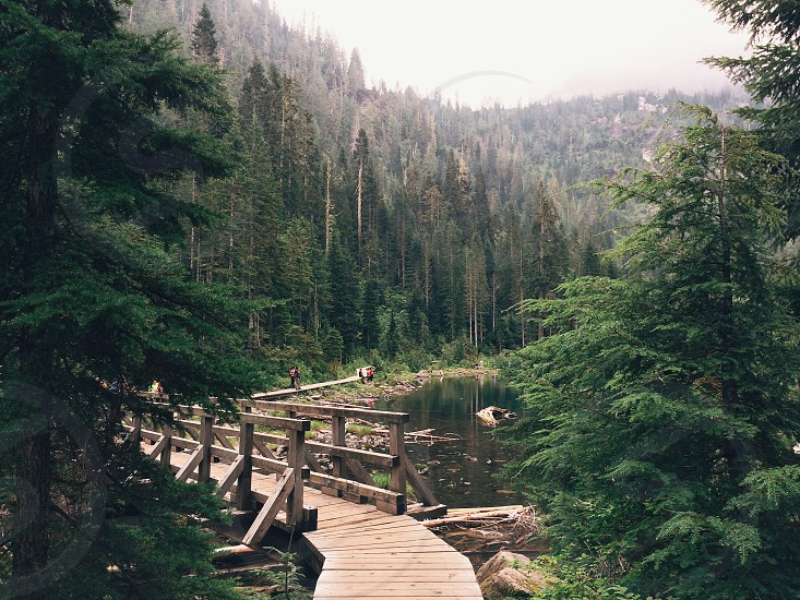 brown wooden bridge near green tall trees photo