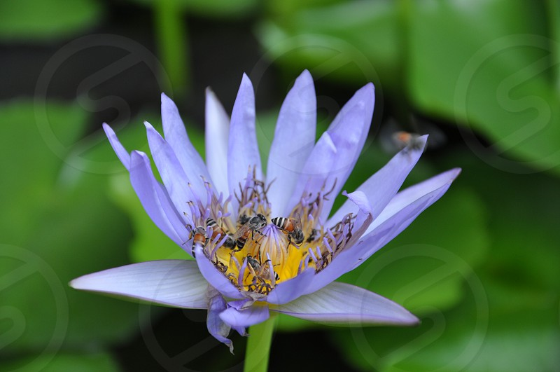 Blooming bees photo