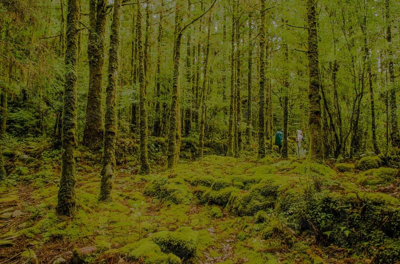 green moss tree photo