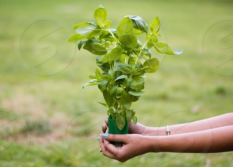 Plant a tree... photo
