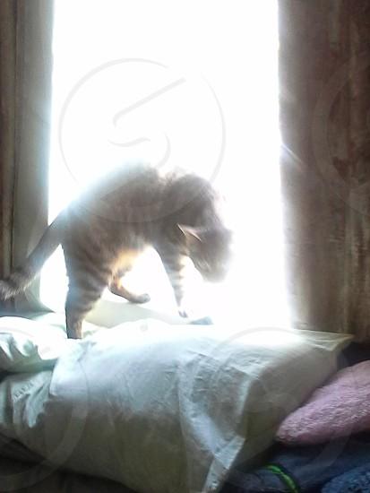 eerie cat photo