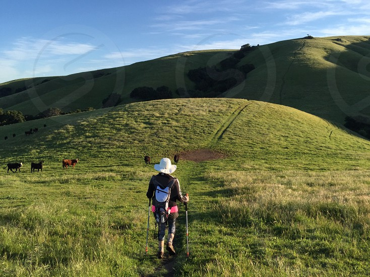 Extreme hiking destination grass hiking hiker climbing hat woman backpack hydration pack poles fremont CA Garin Park steep adventure cows tall grass hills photo
