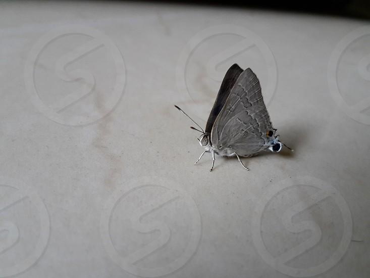 beautiful strange butterfly in world photo