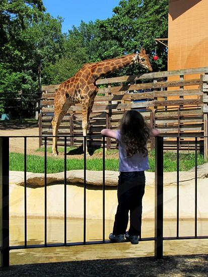 Girl watching giraffe at zoo photo