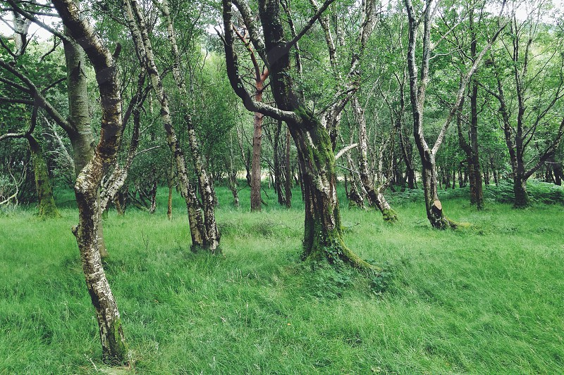 green and grey forest trees photo