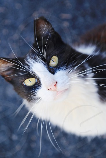 Cutest cat closeup portrait green eyes outdoors whiskers beautiful  nose photo