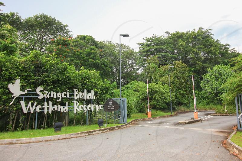 The sungei buloh wetland reserve of Singapore photo