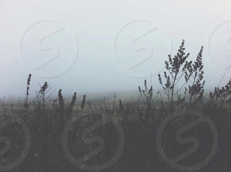 fog winter cold  photo