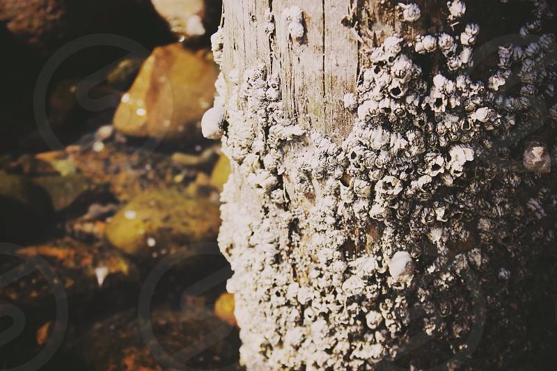 gray tree trunk  photo