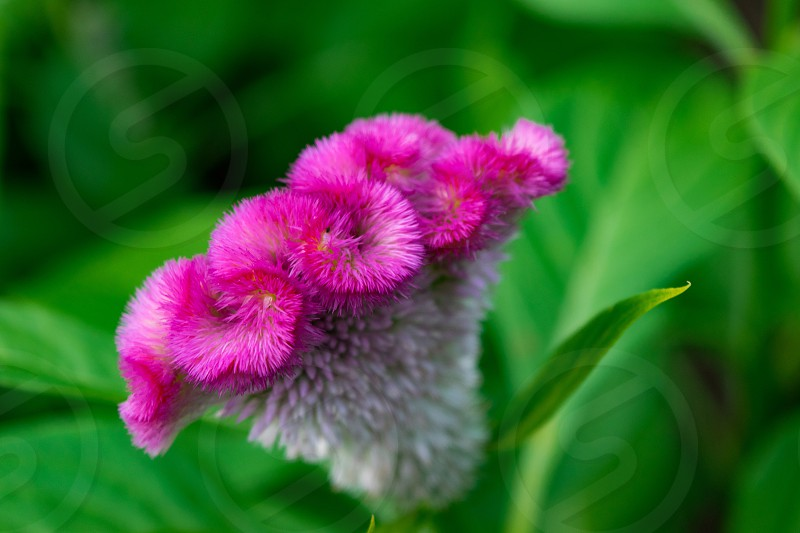 Pretty Pink Flower with Distinct Texture 2 photo