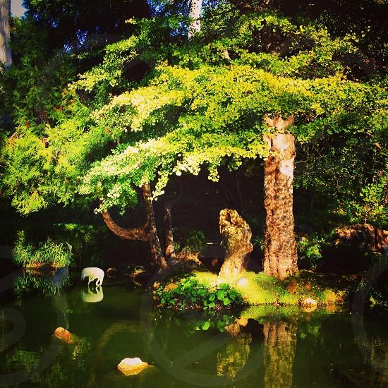 San Francisco Japanese Tea Gardens in Golden Gate Park.  photo