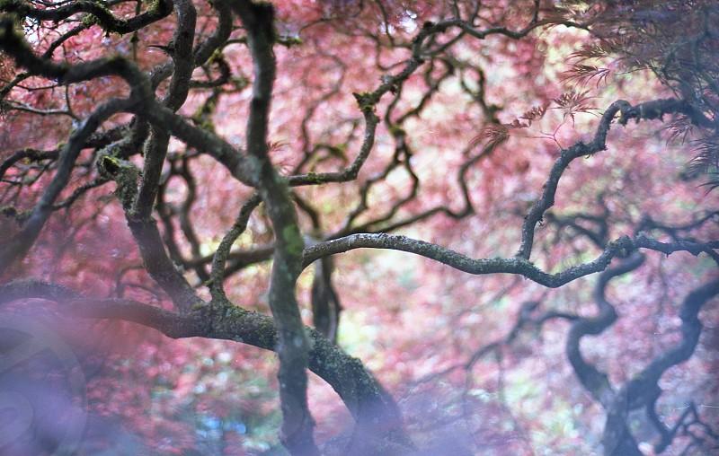 pink flowered tree photo