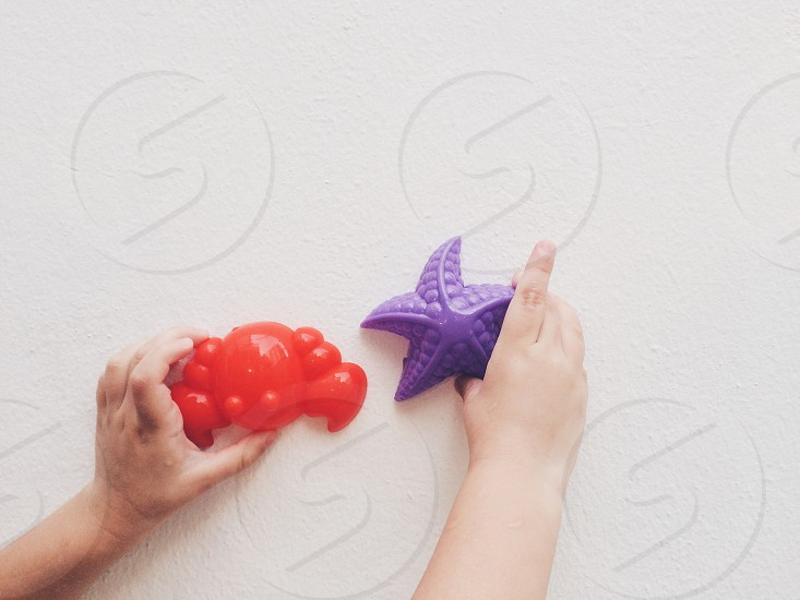 red crab violet red chill wall back background hands holding photo