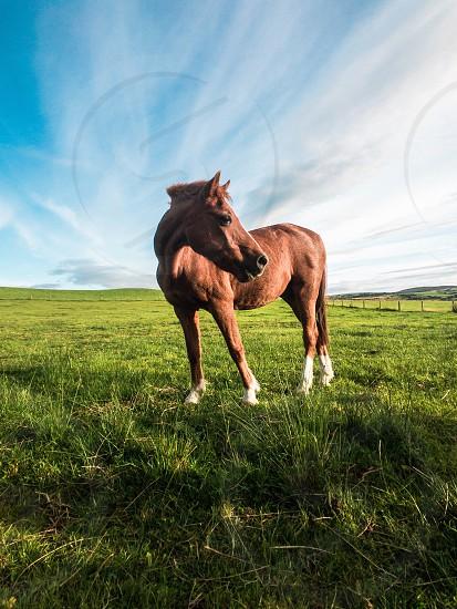 Irish horse photo