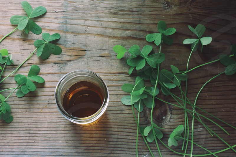 green four leaf clovers photo