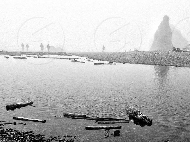 driftwood floating in water in grayscale photography photo