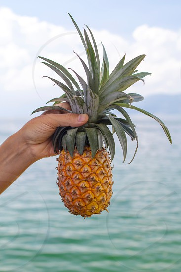 pineapple in hand photo
