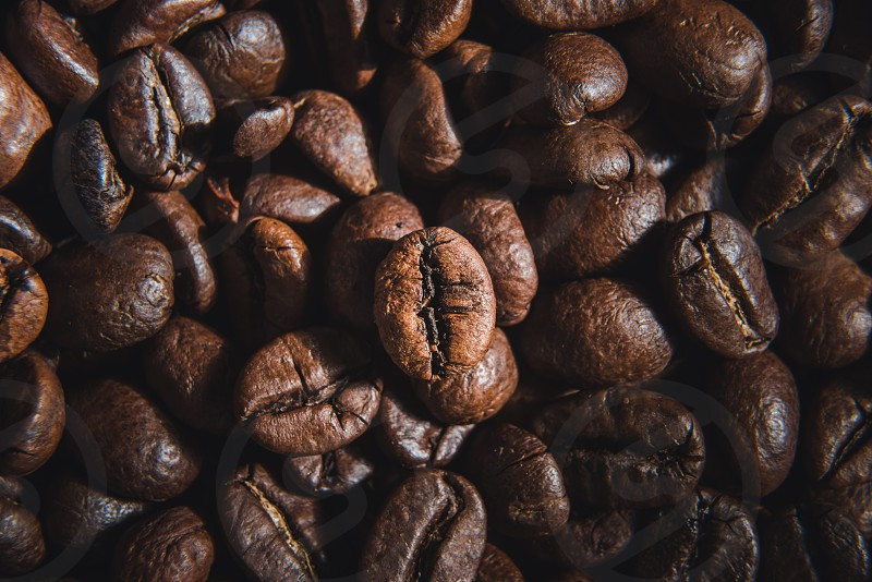 Close up view of the coffee bean photo