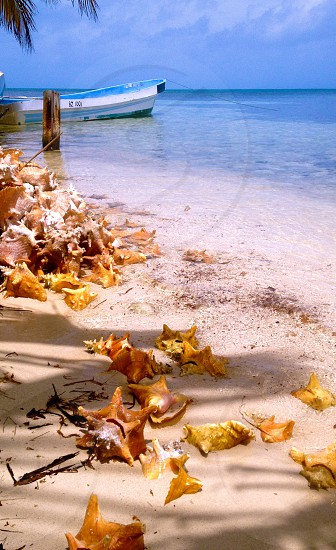 South Water Cay Belize conch and boat on the beach photo