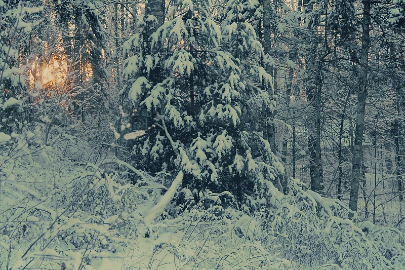 snow covered tree view photo